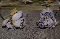 在木桌上的两朵干燥玫瑰 库存图片