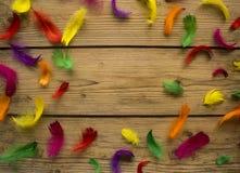 在木桌上的五颜六色的羽毛 库存图片