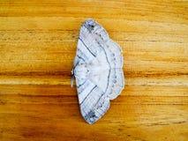 在木桌上的夜蝴蝶 库存照片