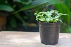 在木桌上的小植物罐 免版税库存照片