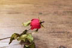 在木桌上的干玫瑰 免版税库存图片