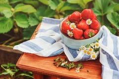 在木桌上的新鲜的有机家庭成长草莓在板材 免版税库存照片