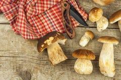 在木桌上的新鲜的牛肝菌蕈类蘑菇 收集可口食物的蘑菇 免版税图库摄影