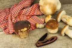 在木桌上的新鲜的牛肝菌蕈类蘑菇 收集可口食物的蘑菇 免版税库存照片