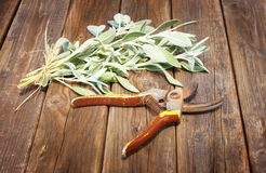 在木桌上的新鲜的贤哲植物 免版税库存照片