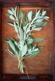 在木桌上的新鲜的贤哲植物 库存照片
