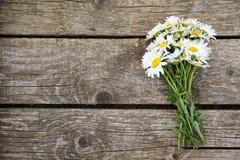 在木桌上的春黄菊 库存照片