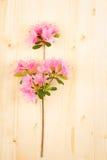 在木桌上的桃红色杜娟花 库存照片