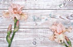 在木桌上的桃红色虹膜花 顶视图,拷贝空间 库存图片