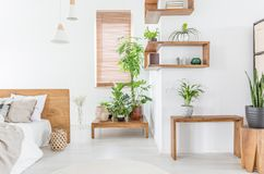 在木桌上的植物在与床的白色卧室内部在与窗帘的窗口旁边 实际照片 免版税图库摄影
