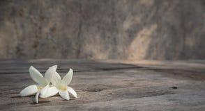在木桌上的白色Millingtonia 免版税库存图片