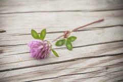 在木桌上的紫色三叶草花 免版税库存图片