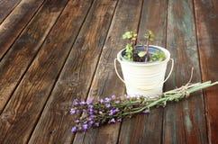 在木桌上的罗斯玛丽和大竺葵植物 库存图片