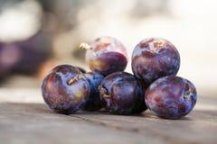 在木桌上的自然有机蓝色李子 农夫结果实静物画摄影,选择聚焦美好的bokeh 免版税库存图片