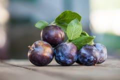 在木桌上的自然有机蓝色李子 农夫结果实静物画摄影,选择聚焦美好的bokeh 库存图片