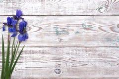 在木桌上的蓝色虹膜花 顶视图,拷贝空间 库存图片