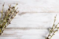 在木桌上的褪色柳枝杈 免版税库存照片
