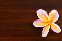 在木桌上的赤素馨花花 库存照片
