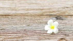 在木桌上的赤素馨花花 免版税库存照片
