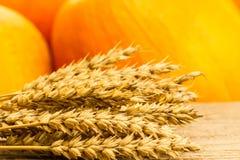 在木桌上的麦子在南瓜背景  免版税库存照片