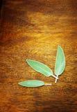 在木桌上的贤哲植物叶子 库存照片
