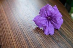 在木桌上的紫色狂放的喇叭花花 免版税图库摄影
