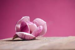 在木桌和桃红色背景上的一朵桃红色花 可爱的花 欢乐贺卡 免版税库存照片