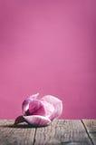 在木桌和桃红色背景上的一朵桃红色花 可爱的花 欢乐贺卡 库存图片
