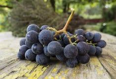 在木桌和麝香草上的葡萄 免版税库存照片