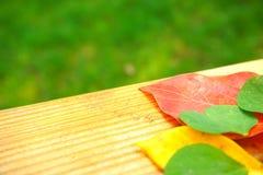 在木桌和绿草背景的五颜六色的叶子 免版税库存图片