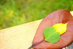 在木桌和绿草背景的五颜六色的叶子 库存照片