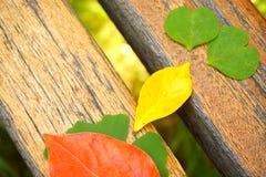 在木桌和绿草背景的五颜六色的叶子 免版税图库摄影
