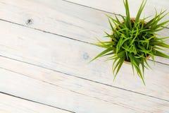 在木桌的盆的草花 免版税库存图片