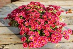 在木桌等待的收藏的红色花的教会 免版税库存照片