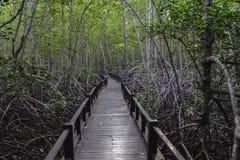 在木桥梁的走道在森林里 免版税库存照片