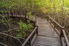 在木桥梁的走道在森林里 库存图片