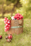 在木桶的葡萄 库存照片