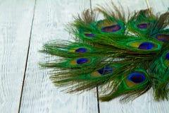 在木灰色背景的一根孔雀羽毛 图库摄影