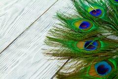 在木灰色背景的一根孔雀羽毛 库存图片