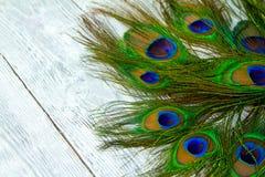 在木灰色背景的一根孔雀羽毛 免版税库存照片