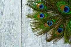 在木灰色背景,顶视图的一根孔雀羽毛 免版税库存图片