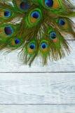 在木灰色背景,顶视图的一根孔雀羽毛 免版税图库摄影