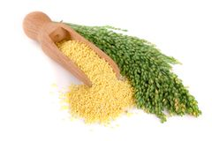 在木瓢的小米有在白色背景隔绝的绿色小尖峰的 免版税库存图片