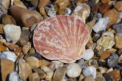 在木瓦岸的海壳 库存图片