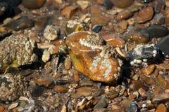 在木瓦海滩的湿石头 免版税库存照片