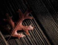 在木甲板的布朗叶子 免版税图库摄影