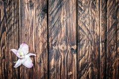 在木的兰花花 免版税库存图片