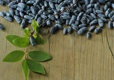 在木的忍冬属植物莓果 免版税库存照片