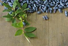 在木的忍冬属植物莓果 库存图片