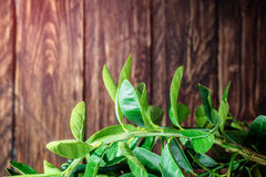 在木的柠檬树 免版税库存照片